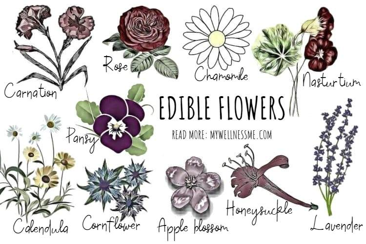 Popular edible flowers sketch