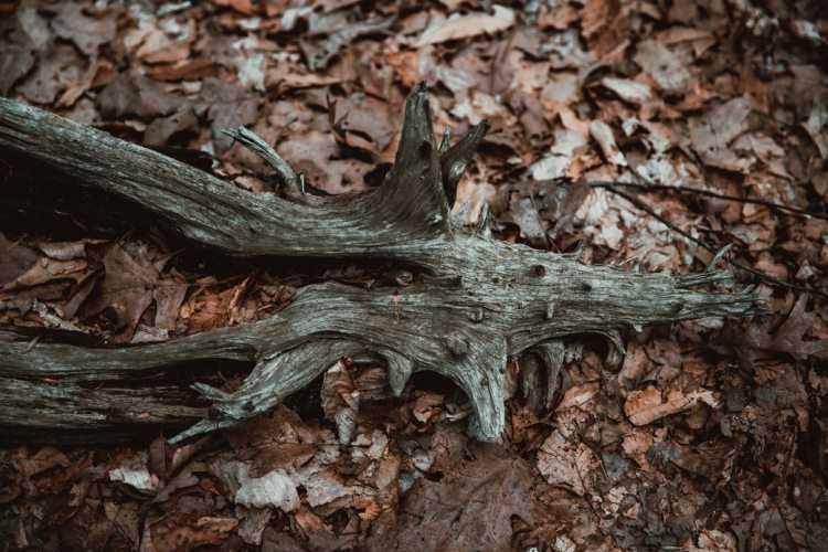 Skull shaped driftwood