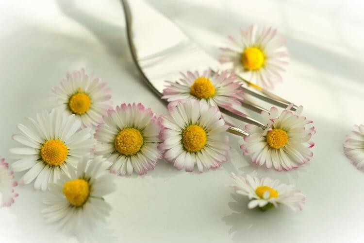 Edible flower daisies